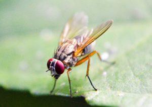 a fly on green leaf