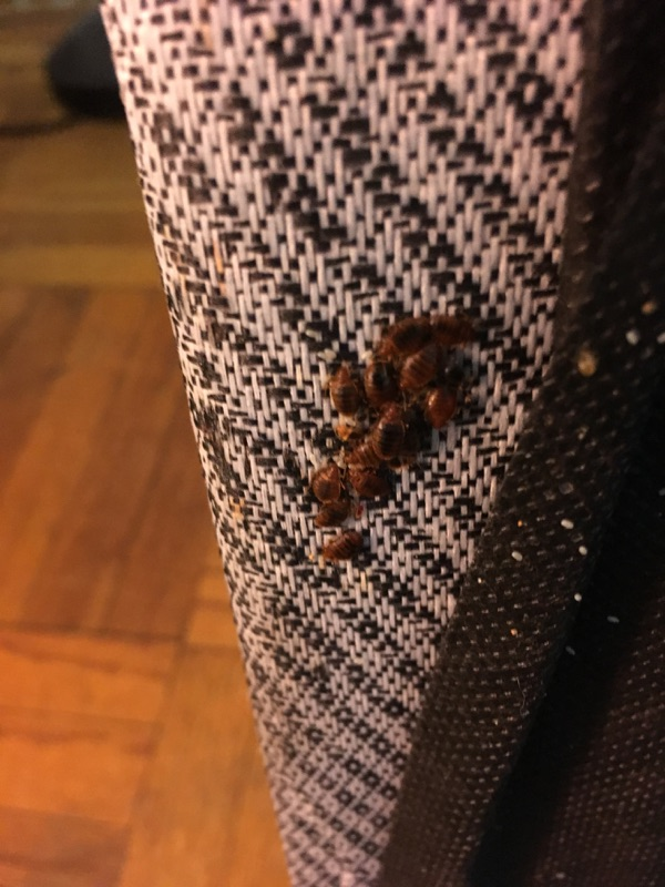 Bed Bugs Nyc Hotels