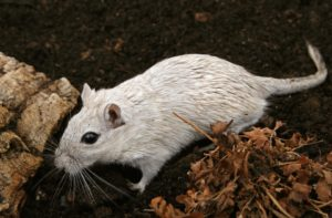 rat, rats, mice, mouse, rodents, nyc, Deposit