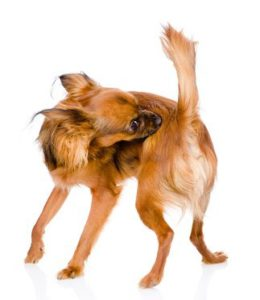 a dog is scratching his back