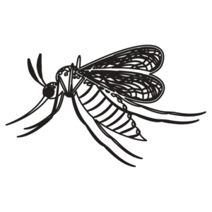 illustration of a mosquito